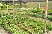 Horta comunitária para os moradores.