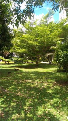 àrea verde do condominio
